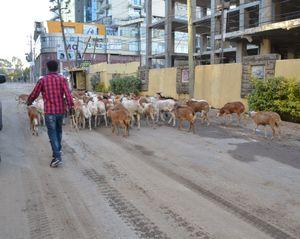 A street in Adis Ababa Ethiopia