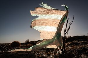 Plastic Tree #22