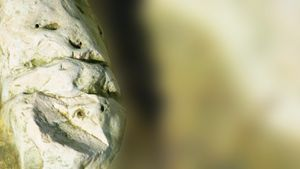 Stones&Faces 08