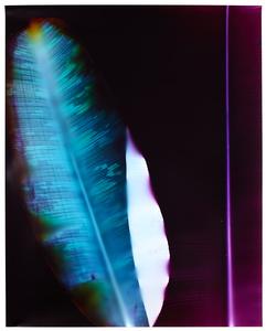 Eclipse #2. Unique chromogenic photogram. 40x32 inches, 2014