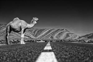 Camel Crossroads