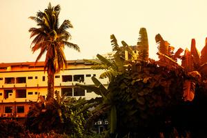 Borneo Heat / #9