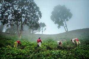 4 women, a tea garden and the fog.