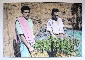 Farmers: Realmente es Marihuana.Marijuana really is.