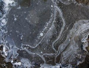 """Skua,"" Lake Hoare, Antarctica"