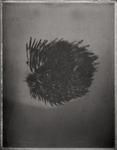 Pufferfish, Diodon holucanthus