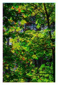 Tree Lights 02