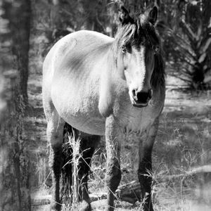 Horse in Pines © Anne Berry