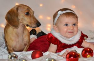 THE DOG AND BABY SHOW
