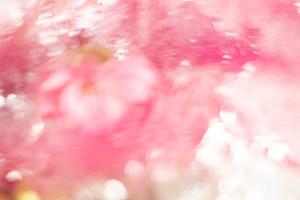 Flower For Fragility- Flower bloomed one day Ⅱ