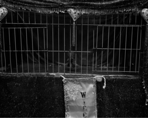Some Things are Bleak (cage), 2014