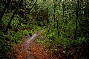 Hiking With Jeanne 2, Purisima Creek Redwood