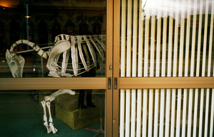 Blinds and bones, 2009