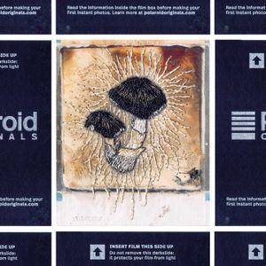 N°114 : It's no longer Polaroid but mushroom
