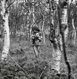 Belas birch trees nest