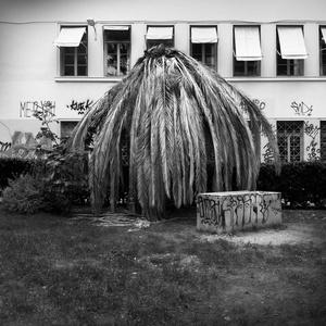 NTUA Palmtree, Exarchia district.