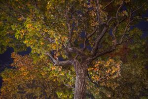 Night Trees of New York: Into the Woods