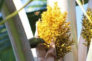 Nectar sharing