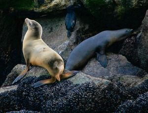 The Sea Lion and the Seal