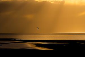 Bird over the Great Salt Lake