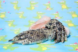 Crocodile leg for human eat