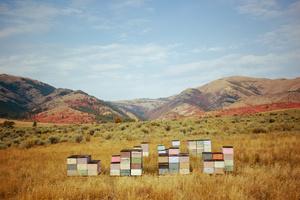 Honey Bee Boxes in Idaho in Fall