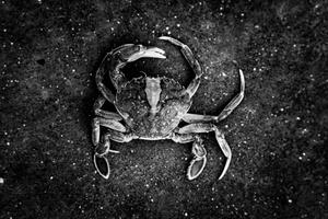 Crappy Crab