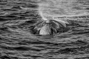 Whale BYN