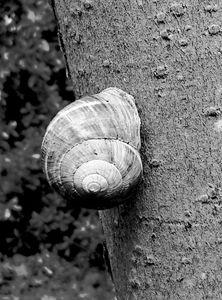 Snail on a Tree 1
