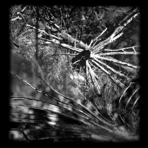 Clara Mill 03_Cracked Miror serie