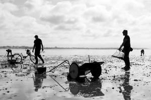 Les ramasseurs de coques