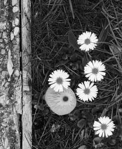 Mushroom and Flowers 3