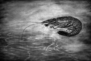 Black Seagold