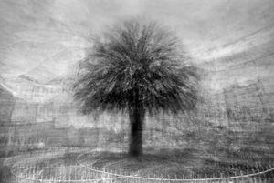 stadtbaum#33