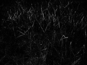 constellations-invasives-04.jpg