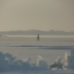Alone on the Ice