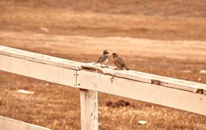 Two birds argue,