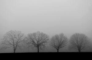 Foggy Four