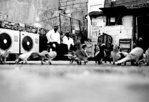 "Urfa ""pigeons on the roof"""