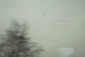03 BETWEEN - A storm migratory birds - Germany