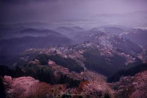 Rainy Yoshino, Early morning