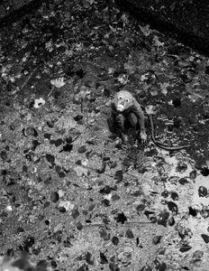 Trapped © Jürgen Novotny