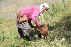 She and Lamb