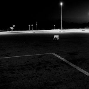 © Stéphane Vandenplas