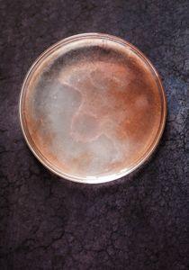 Petri Nebula 391.9