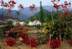 Gwangju, 1985