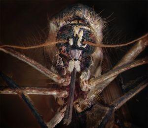Kitchen Windowsill, September 14th [Mosquito]