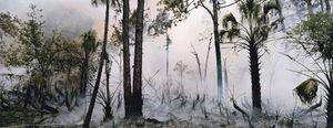 Fire in the Swamp #1 © Karen Glaser 2007