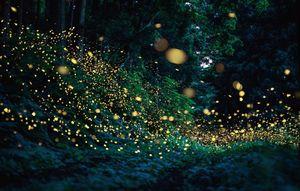 Firefly road