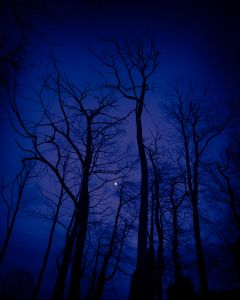 Trees and Moon in Blue.
